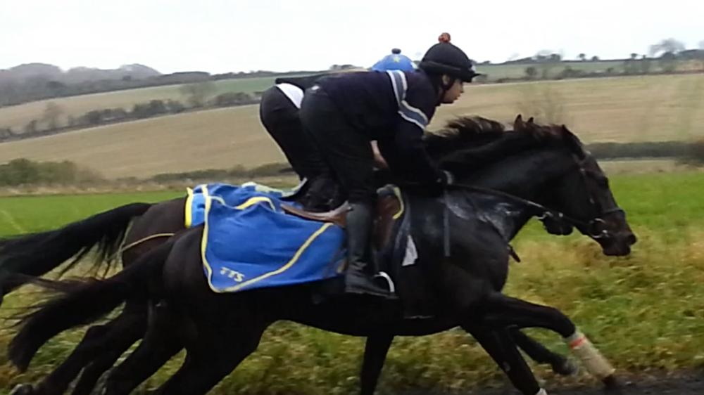 Castlemorris King & Vacario working