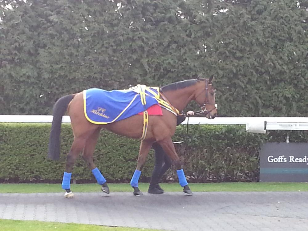 Swift Lord best turned out @ Kempton Park