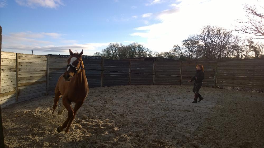In The Crowd having a spin in the new lunge pen